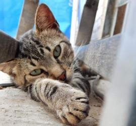 cat-633071_1920