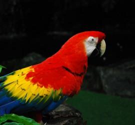 parrot-106967_1920